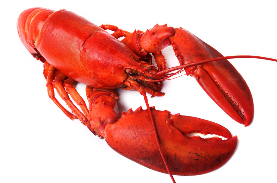 photo of a whole red lobster isolated on white background