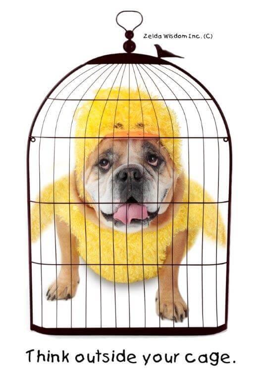 Zelda cage