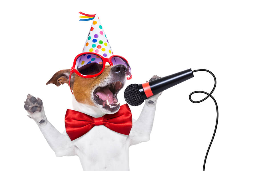 jack russell dog as a surprise singing birthday song like karaoke with microphone wearing red tie and party hat isolated on white background